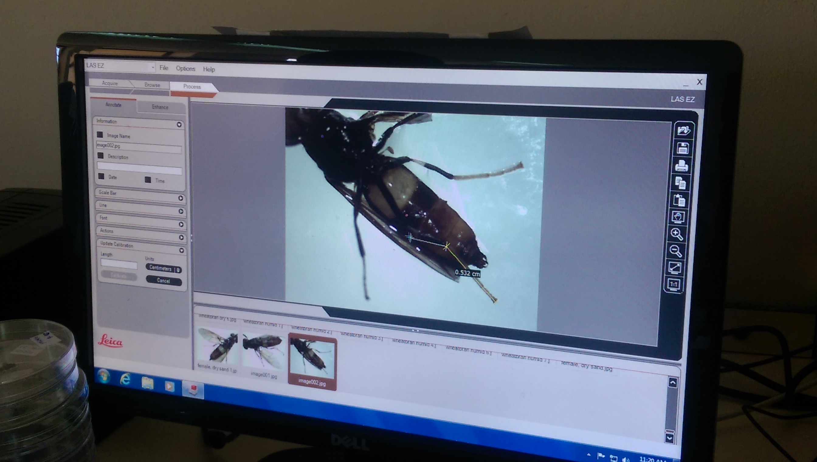 Research on Black Soldier Fly shows amazing results.