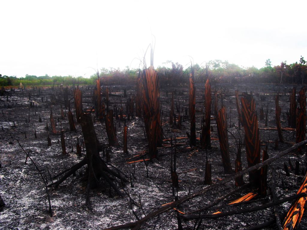 Burned down woodland in Brazil